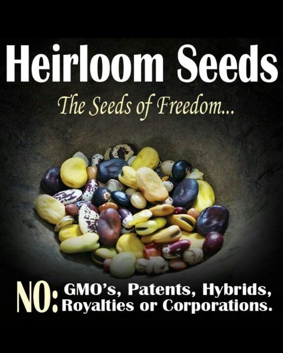 Garden Seed Companies for Quality Heirloom Vegetable and Survival