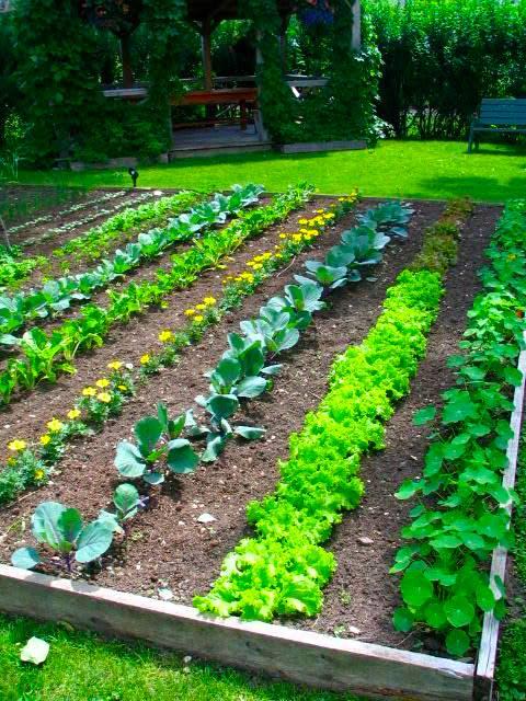 Back To Eden Gardening The Natural No Till Beyond Lasagna Gardening Method