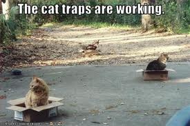 cattraps2