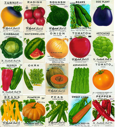 Free Garden Seeds Free Vegetable and Flower Seeds Easy to Find