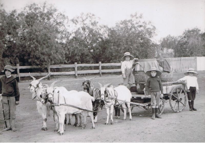 goatcart