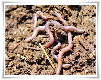 howtoraiseearthworms