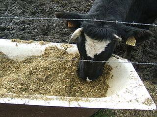 livestockfeed