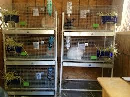 rabbitcage2